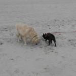 008 - lekker samen op het strand