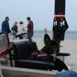 011 - Stevie in mijn rolstoel na een heerlijke wandeling