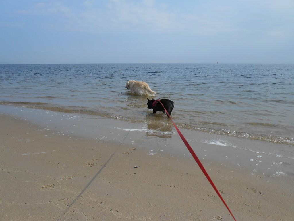 065 - de jongens liepen steeds weer de zee in