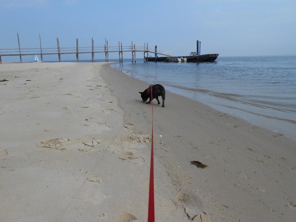 066 - Stevie alleen met Rene het strand op