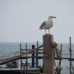 124 - ook bij Kaap Noord kregen we visite van de meeuwen