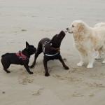 18 - zo mooi om te zien hoe de honden spelen