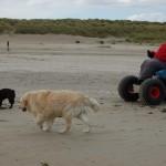22 - nu kunnen beide lekker los lopen op het strand