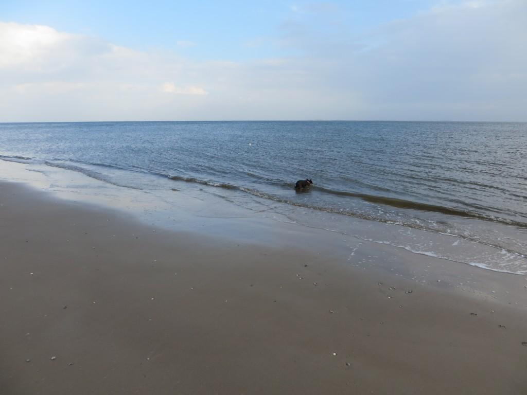 75 - lekker los lopen en dan even de zee in