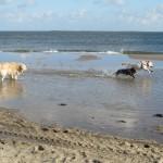 85 - samen rennen door het water